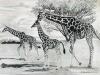giraffe famil